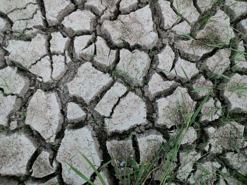 ραγισμένοι τομείς ρυζιού στοκ φωτογραφία
