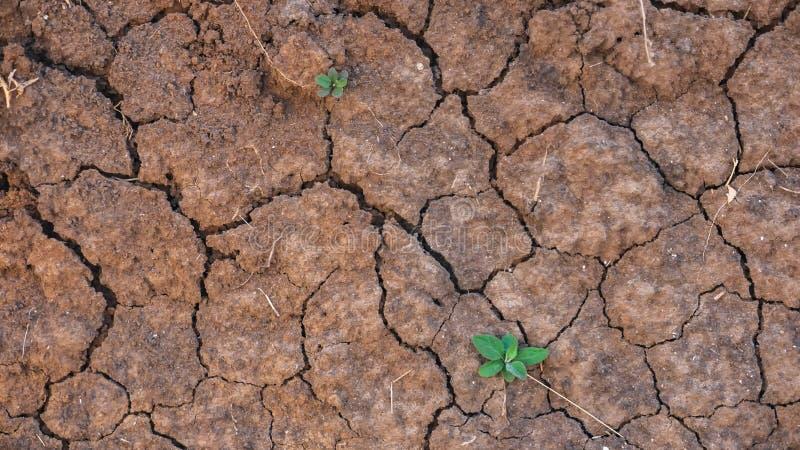 Ραγισμένο έδαφος της ξηρασίας στη γεωργία στοκ φωτογραφία
