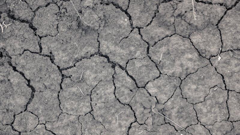 Ραγισμένο έδαφος της ξηρασίας στη γεωργία στοκ φωτογραφία με δικαίωμα ελεύθερης χρήσης