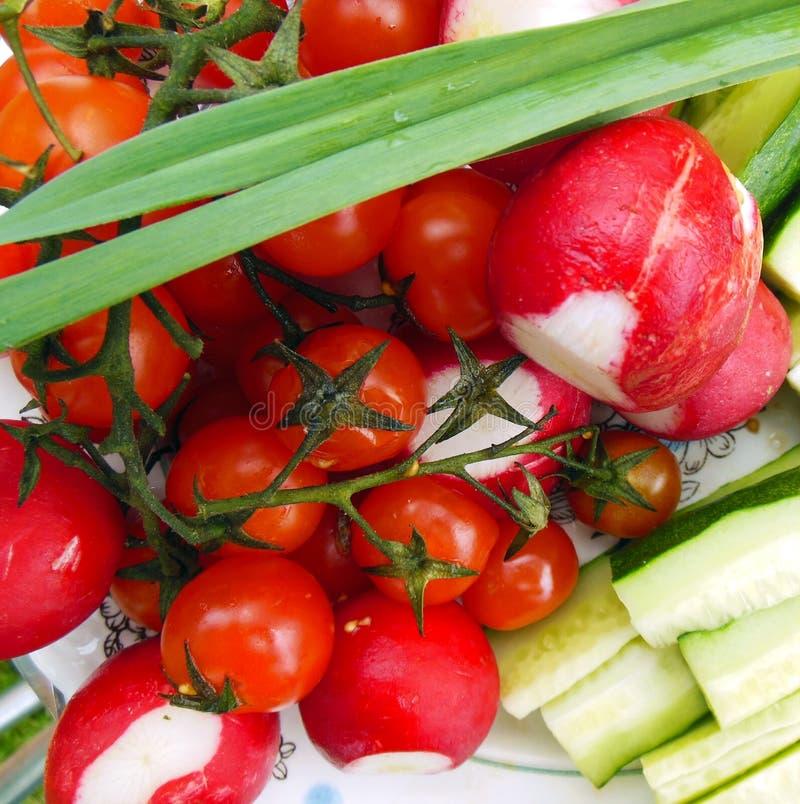 Ραδίκι κήπων, αγγούρι, ντομάτα, πράσινα στοκ εικόνες με δικαίωμα ελεύθερης χρήσης