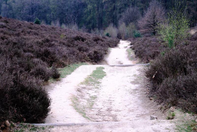 Ρείκι και πορεία στο Posbank σε Rheden, εθνικό πάρκο Veluwe, Ν στοκ φωτογραφία με δικαίωμα ελεύθερης χρήσης