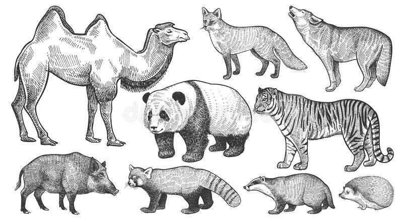 Ρεαλιστικά ζώα καθορισμένα ελεύθερη απεικόνιση δικαιώματος