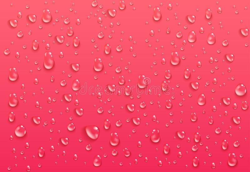 Ρεαλιστικές διαφανείς πτώσεις νερού Καθαρά συμπυκνωμένα σταγονίδια στο φωτεινό ρόδινο υπόβαθρο Υγρή επιφάνεια και σαφές υγρό διανυσματική απεικόνιση