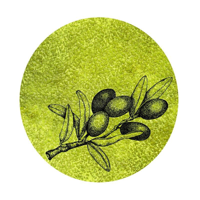 Ρεαλιστική απεικόνιση του μαύρου και πράσινου κλάδου ελιών που απομονώνεται στο άσπρο υπόβαθρο Σχέδιο για το ελαιόλαδο, φυσικά κα ελεύθερη απεικόνιση δικαιώματος
