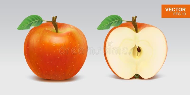 Ρεαλιστική κόκκινη διανυσματική απεικόνιση μήλων, εικονίδιο Ολόκληρη και μισή φέτα του μήλου ελεύθερη απεικόνιση δικαιώματος