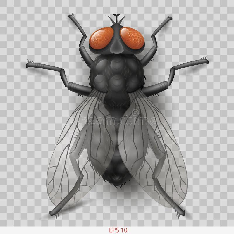 Ρεαλιστική μύγα εντόμων στη διανυσματική μύγα εντόμων ελεύθερη απεικόνιση δικαιώματος