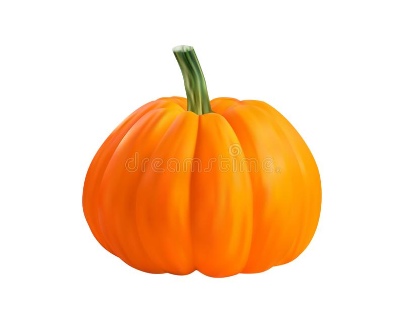 Ρεαλιστική πορτοκαλιά διανυσματική απεικόνιση κολοκύθας διανυσματική απεικόνιση