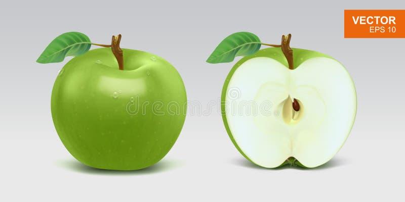 Ρεαλιστική πράσινη διανυσματική απεικόνιση μήλων, πρότυπο μισό σύνολο ασβεστών ελεύθερη απεικόνιση δικαιώματος