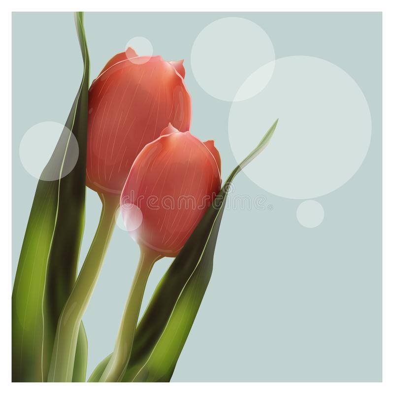 Ρεαλιστική τουλίπα λουλουδιών Τουλίπα σε διανυσματικό eps10 στοκ εικόνα με δικαίωμα ελεύθερης χρήσης