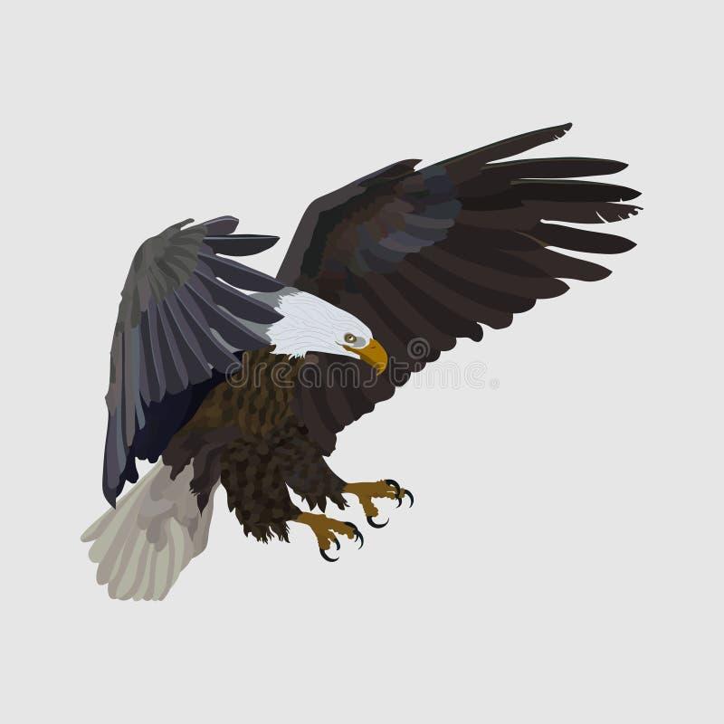 Ρεαλιστικός αετός ανύψωσης αετών, που πιάνει το θήραμα, ένα σύμβολο του freedo διανυσματική απεικόνιση