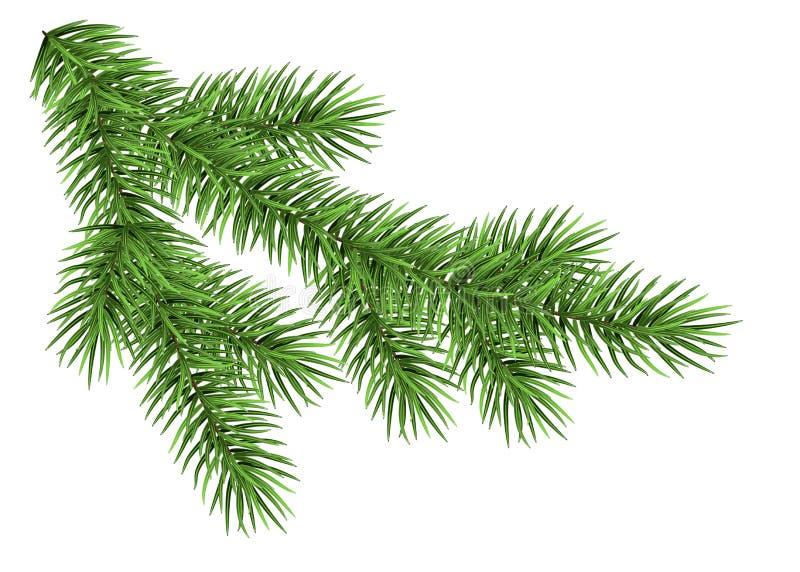 Ρεαλιστικός κλάδος χριστουγεννιάτικων δέντρων ελεύθερη απεικόνιση δικαιώματος
