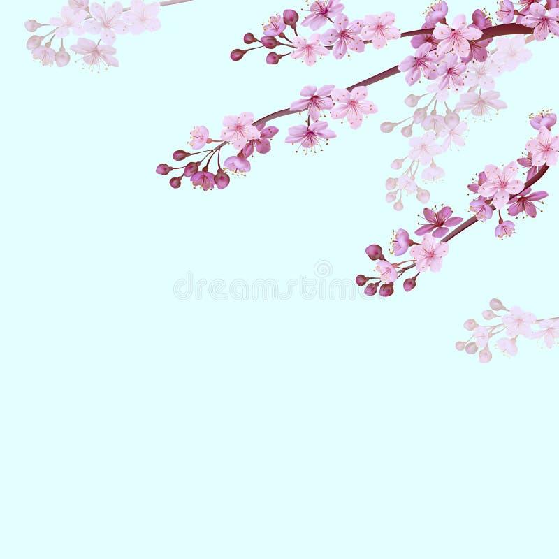 Ρεαλιστικό κινεζικό ρόδινο υπόβαθρο sakura στο μαλακό υπόβαθρο μπλε ουρανού Ασιατικό υπόβαθρο άνοιξη ανθών λουλουδιών σχεδίων διανυσματική απεικόνιση