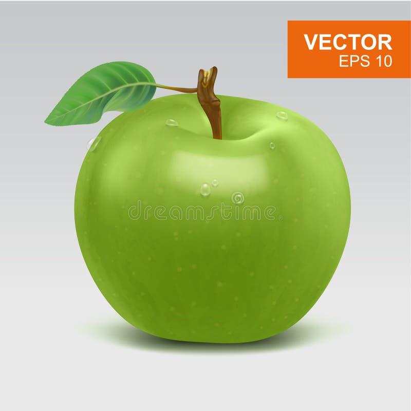 Ρεαλιστικό ολόκληρο το πράσινο διάνυσμα μήλων clipart, το εικονίδιο, το πρότυπο με το πράσινο φύλλο και το νερό μειώνονται διανυσματική απεικόνιση