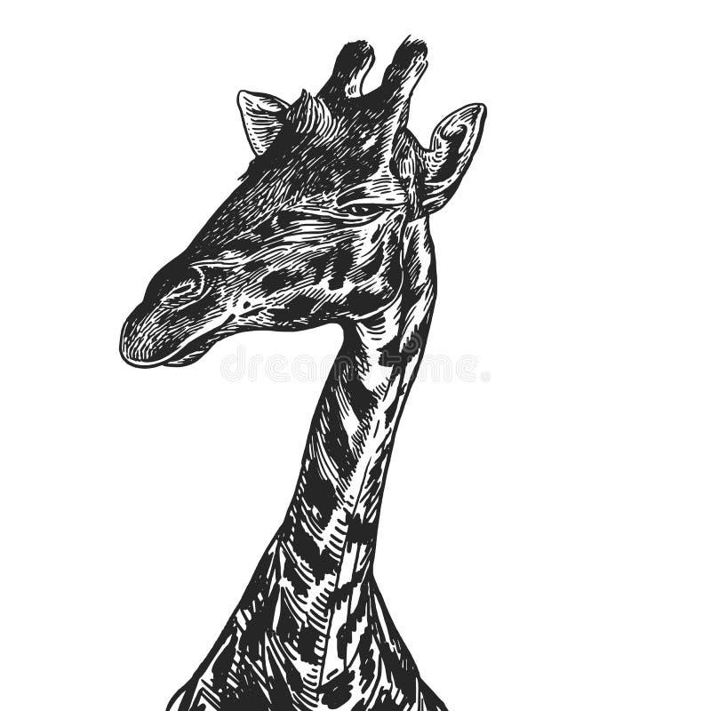Ρεαλιστικό πορτρέτο αφρικανικό ζωικό Giraffe Εκλεκτής ποιότητας χάραξη ελεύθερη απεικόνιση δικαιώματος