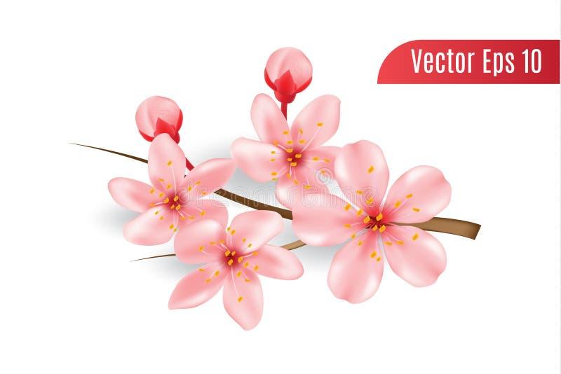 Ρεαλιστικό τρισδιάστατο άνθος κερασιών στο απομονωμένο υπόβαθρο, λουλούδι sakura με τον κλάδο διανυσματική απεικόνιση