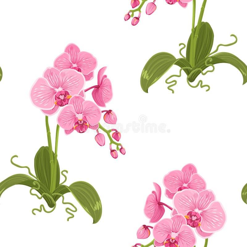 Ρεαλιστικό floral σχέδιο ορχιδεών σκώρων phalaenopsis ελεύθερη απεικόνιση δικαιώματος