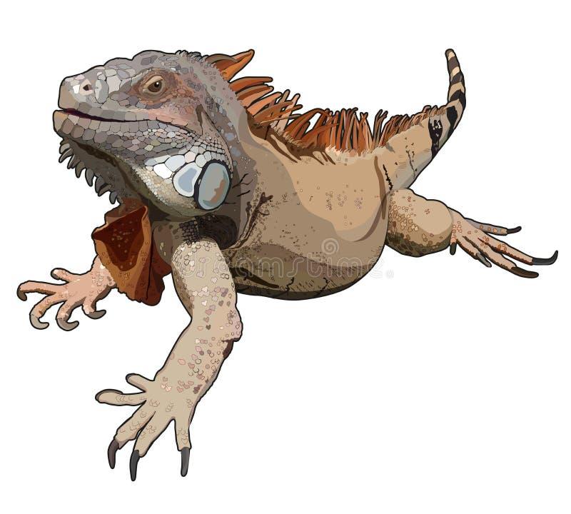 Ρεαλιστικό iguana στο διάνυσμα διανυσματική απεικόνιση