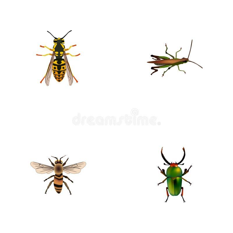 Ρεαλιστική ακρίδα, μέλισσα, σφήκα και άλλα διανυσματικά στοιχεία Το σύνολο ρεαλιστικών συμβόλων εντόμων περιλαμβάνει επίσης Grass ελεύθερη απεικόνιση δικαιώματος