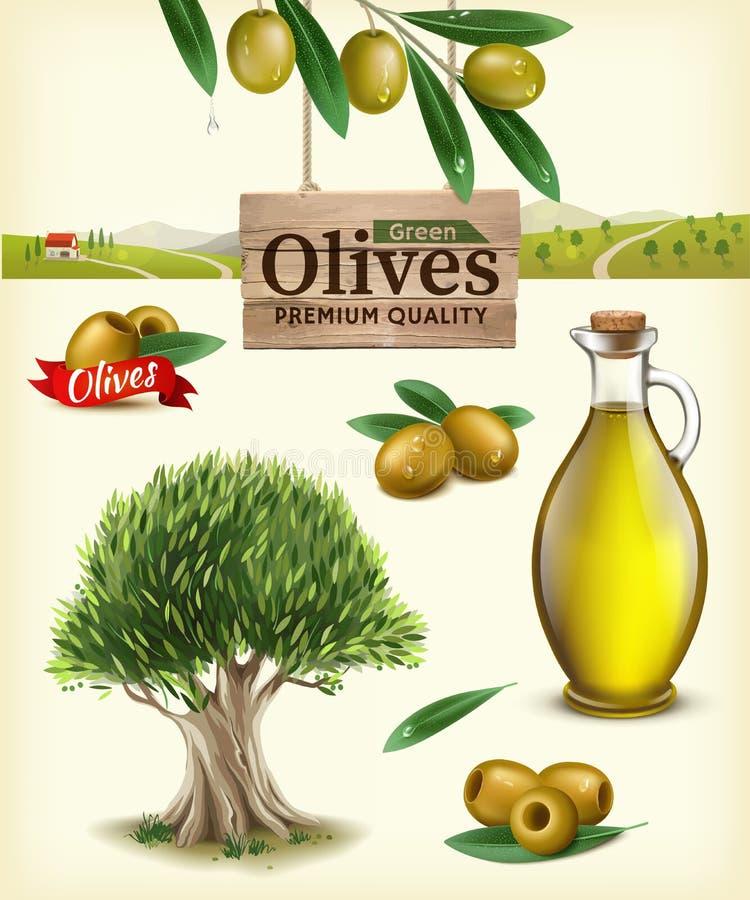 Ρεαλιστική διανυσματική απεικόνιση των ελιών φρούτων, ελαιόλαδο, κλαδί ελιάς, ελιά, αγρόκτημα ελιών Ετικέτα των πράσινων ελιών στοκ εικόνα