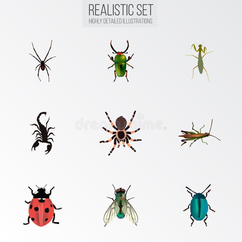 Ρεαλιστικός δηλητηριώδης, μύγα, ακρίδα και άλλα διανυσματικά στοιχεία Το σύνολο ρεαλιστικών συμβόλων εντόμων περιλαμβάνει επίσης  ελεύθερη απεικόνιση δικαιώματος