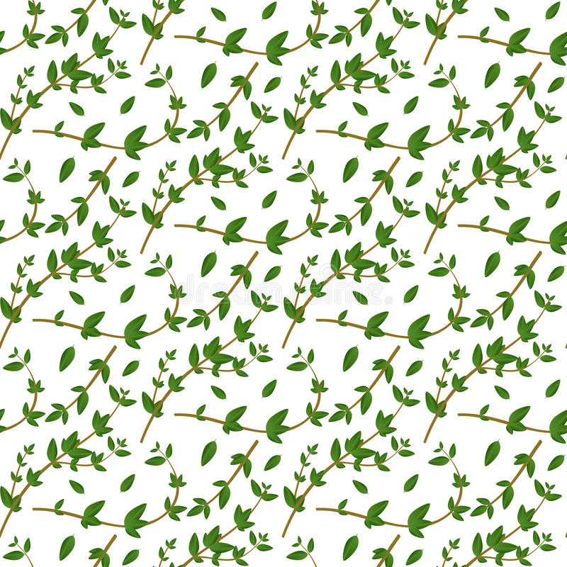 Ρεαλιστικό φυσικό άνευ ραφής σχέδιο με το αειθαλές χορτάρι Κλάδος και φύλλα θυμαριού στο άσπρο υπόβαθρο Ύφος χλωρίδας Διανυσματικ διανυσματική απεικόνιση
