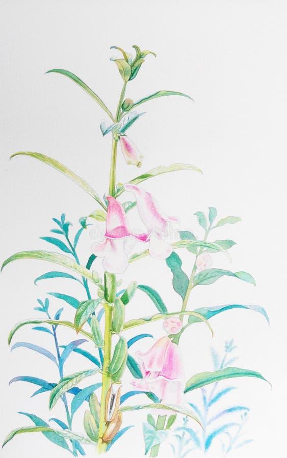 Ρεαλιστικό χορτάρι του λουλουδιού σουσαμιού και των πράσινων φύλλων απεικόνιση αποθεμάτων