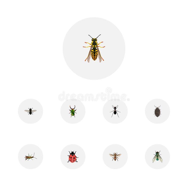 Ρεαλιστικό Dor, ακρίδα, μυρμήγκι και άλλα διανυσματικά στοιχεία Το σύνολο ρεαλιστικών συμβόλων εντόμων περιλαμβάνει επίσης πράσιν απεικόνιση αποθεμάτων