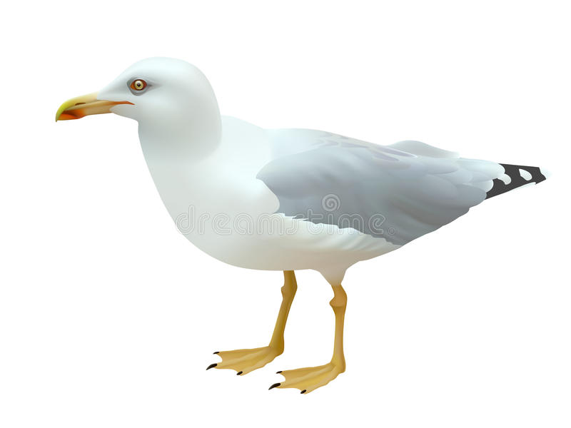 Ρεαλιστικό seagull πουλί θάλασσας που στέκεται στα πόδια του σε ένα άσπρο υπόβαθρο διανυσματική απεικόνιση