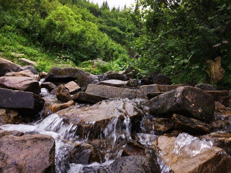 Ρεύμα βουνών Carpathians στοκ εικόνες