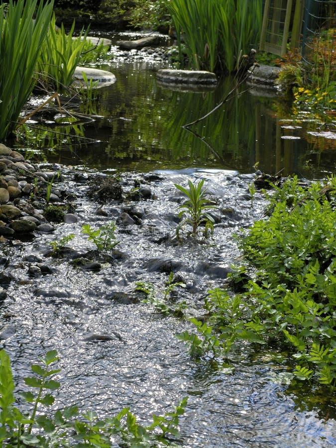 Download ρεύμα κήπων στοκ εικόνα. εικόνα από φυτά, αγροτικός, ύδωρ - 122015