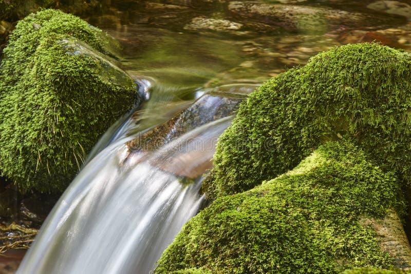 Ρεύμα νερού με τους mossy βράχους στην περιβαλλοντικά προστατευόμενη περιοχή βιόσφαιρας Muniellos SP στοκ εικόνα με δικαίωμα ελεύθερης χρήσης