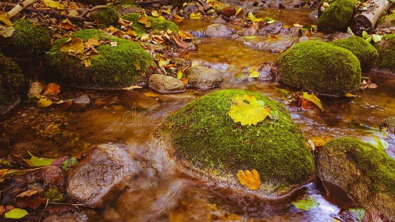 Ρεύμα νερού στο δάσος πτώσης στοκ φωτογραφία με δικαίωμα ελεύθερης χρήσης
