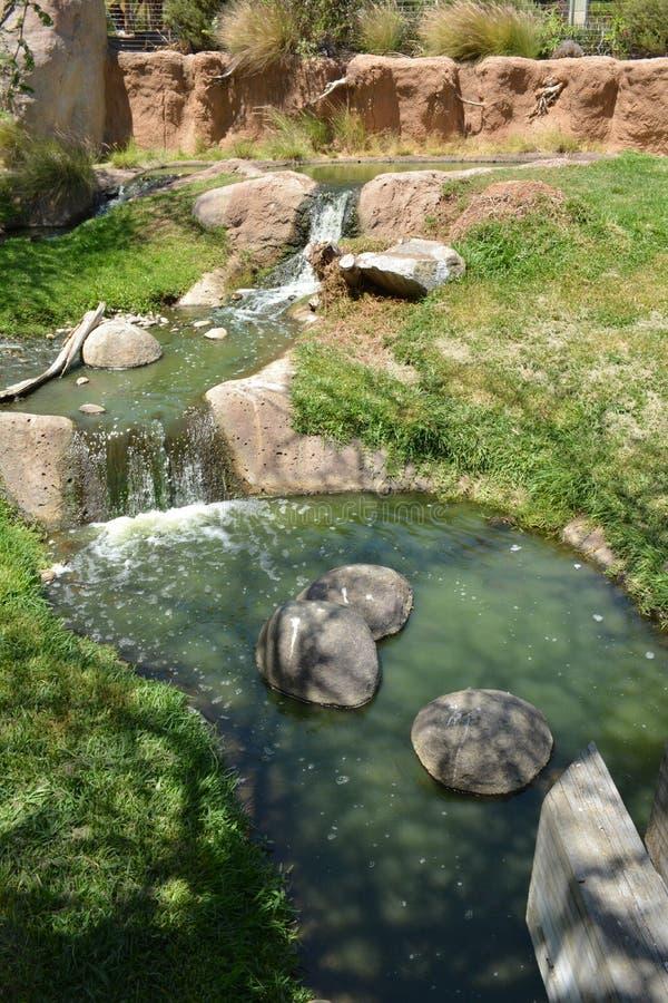 Ρεύμα νερού στο πάρκο άγριας φύσης του Σαν Ντιέγκο στοκ φωτογραφία