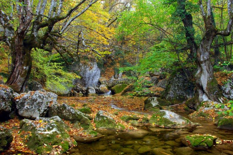ρεύμα ποταμών υψηλών βουνών & στοκ εικόνες
