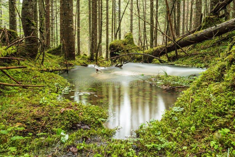 Ρεύμα του νερού στοκ εικόνα με δικαίωμα ελεύθερης χρήσης