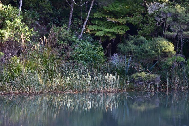Ρηνία στη λίμνη ακτή που αντανακλά στα ύδατα στοκ φωτογραφία