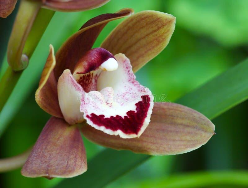 Ρηχό βάθος ορχιδεών λουλουδιών του τομέα στοκ φωτογραφίες με δικαίωμα ελεύθερης χρήσης