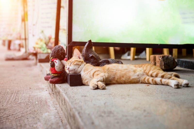 Ριγωτοί redhead πορτοκαλιοί ύπνοι γατών στον ήλιο στην οδό Έβαλε το κεφάλι του σε μια ξύλινη στάση για έναν κενό πίνακα διαφημίσε στοκ εικόνες