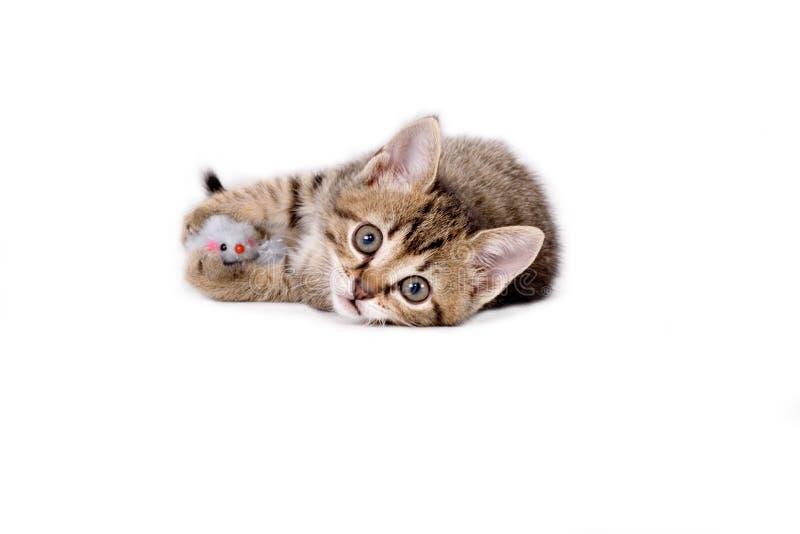 ριγωτό παιχνίδι ποντικιών γ&al στοκ φωτογραφίες