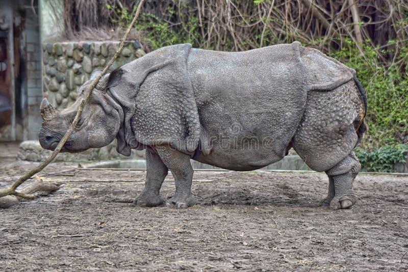 Ρινόκερος στο ζωολογικό κήπο στοκ εικόνες με δικαίωμα ελεύθερης χρήσης