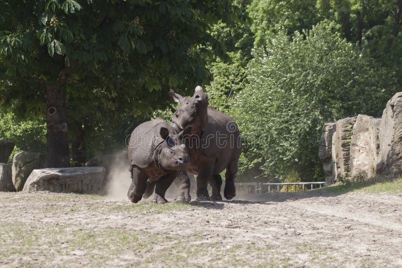 Ρινόκερος στο ζωολογικό κήπο στοκ φωτογραφία