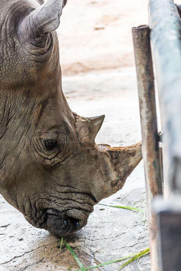 ρινόκερος στοκ εικόνα