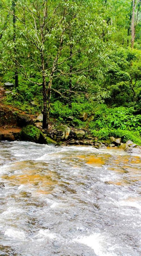 Ροές ποταμών Narmada μέσω του δάσους κατά τη διάρκεια του μουσώνα στοκ φωτογραφίες