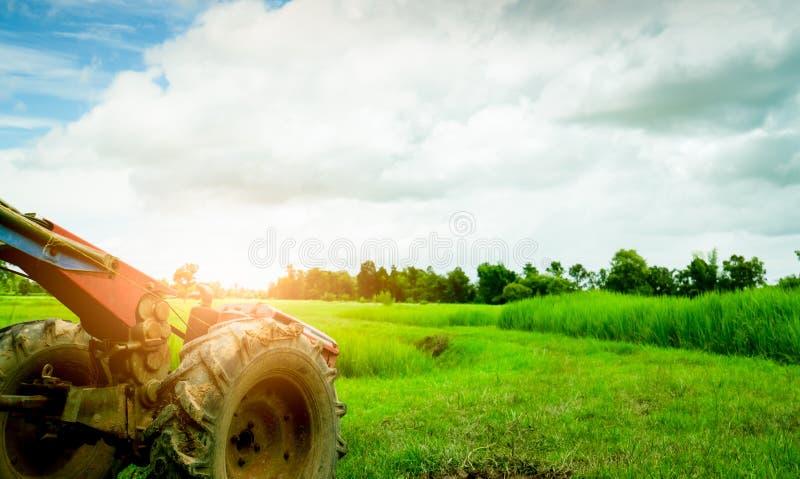 Ροδέλα ή ροδέλα τροχού παρκαρισμένη στο γήπεδο με πράσινο ρύζι paddy Γεωργικά μηχανήματα Ελκυστήρας ελεγχόμενος από πεζούς Εκμετά στοκ φωτογραφία με δικαίωμα ελεύθερης χρήσης