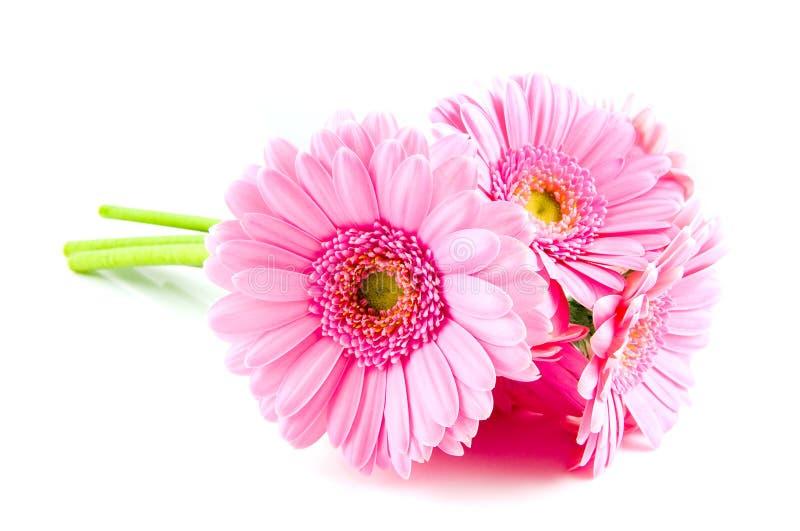 ροζ ανθοδεσμών gerber στοκ φωτογραφίες