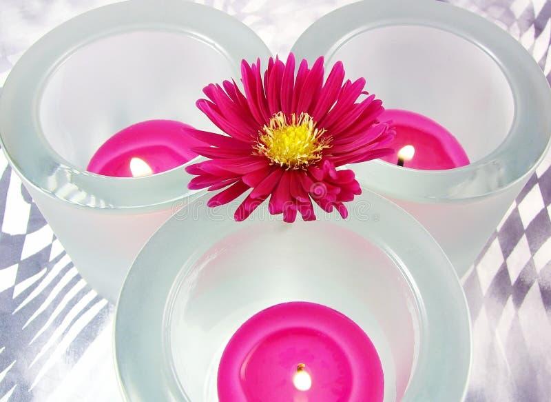 ροζ θερμαστρών λουλου&d στοκ φωτογραφίες