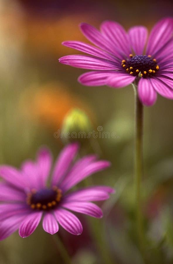 ροζ κόσμου στοκ φωτογραφία με δικαίωμα ελεύθερης χρήσης