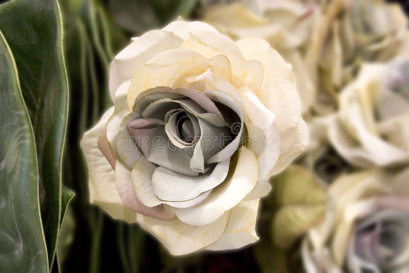 Download ροζ λευκό λουλουδιών &s στοκ εικόνες. εικόνα από εστίαση - 103734