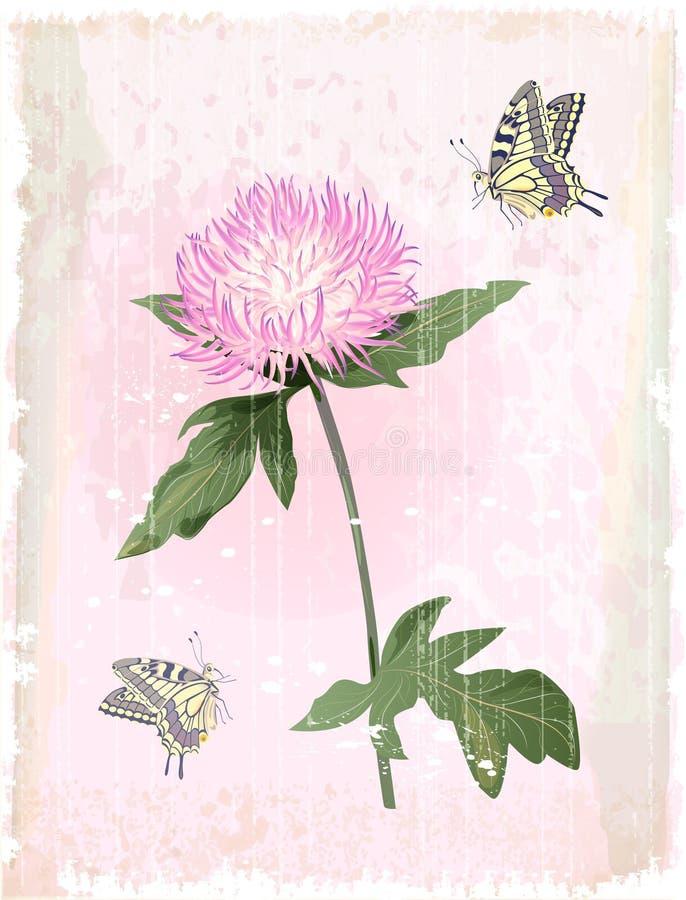 ροζ λουλουδιών αστέρων απεικόνιση αποθεμάτων