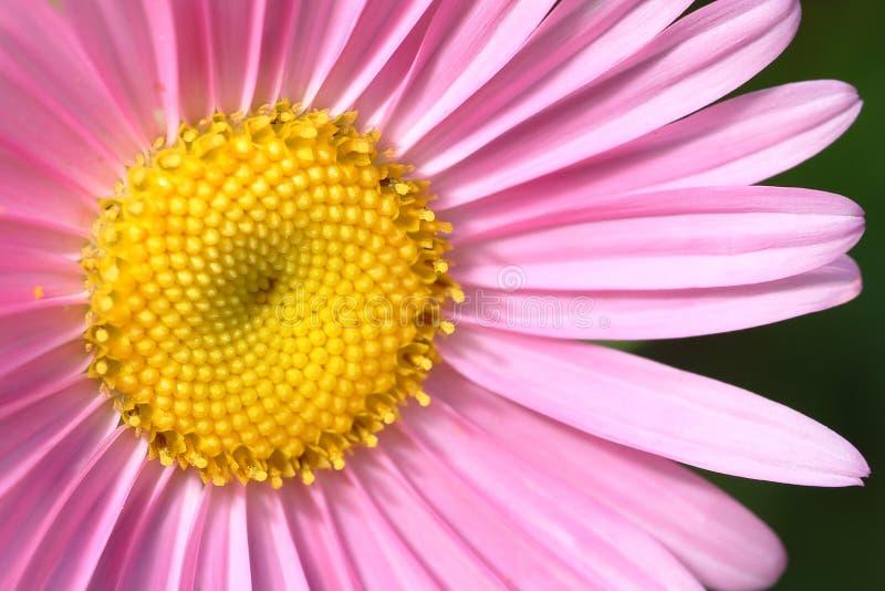 ροζ λουλουδιών στοκ εικόνα με δικαίωμα ελεύθερης χρήσης
